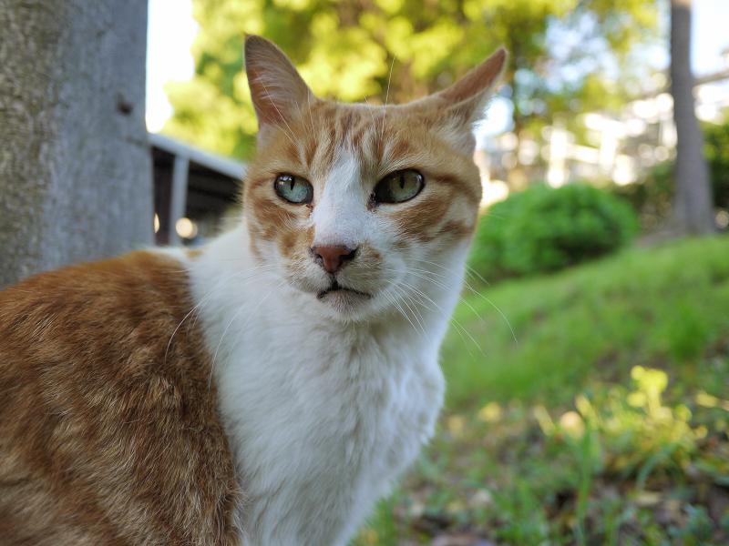 暖色系の中の茶白猫1
