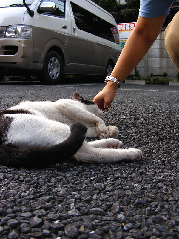 駐車場で触りまくった黒白猫1