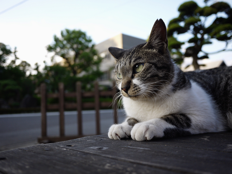 ベンチ上で表情を変えるキジ白猫2