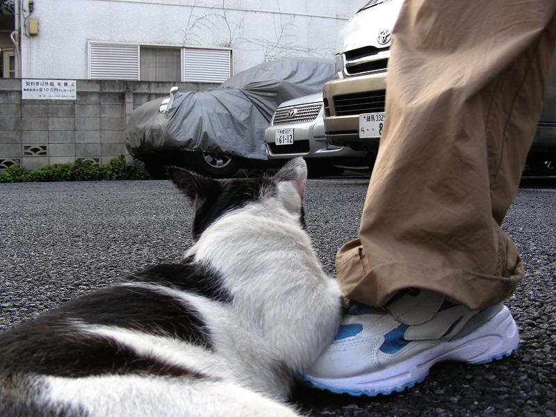 駐車場で転がってる黒白猫3