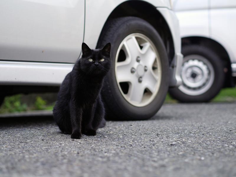 駐車場の黒猫1