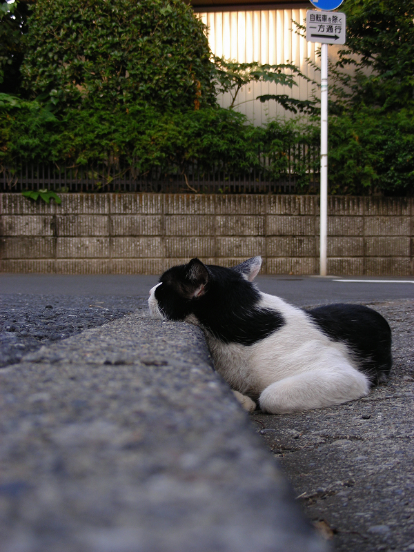 駐車場の縁にアゴを乗せちゃった黒白猫1