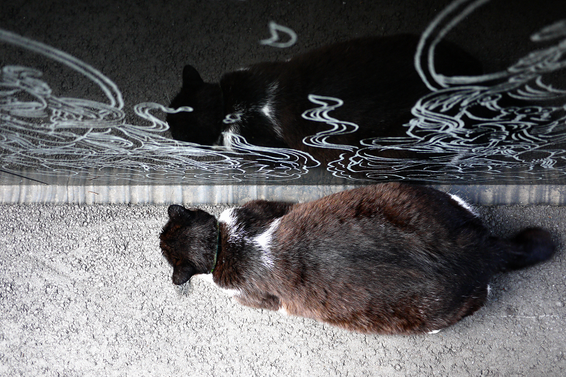 お寺の境内のスロープと黒白猫1
