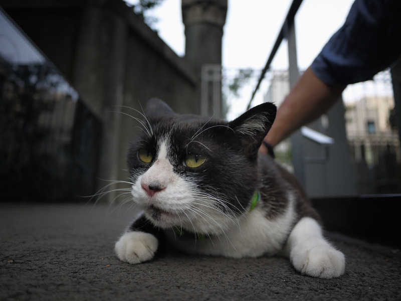 お寺の境内のスロープと黒白猫2