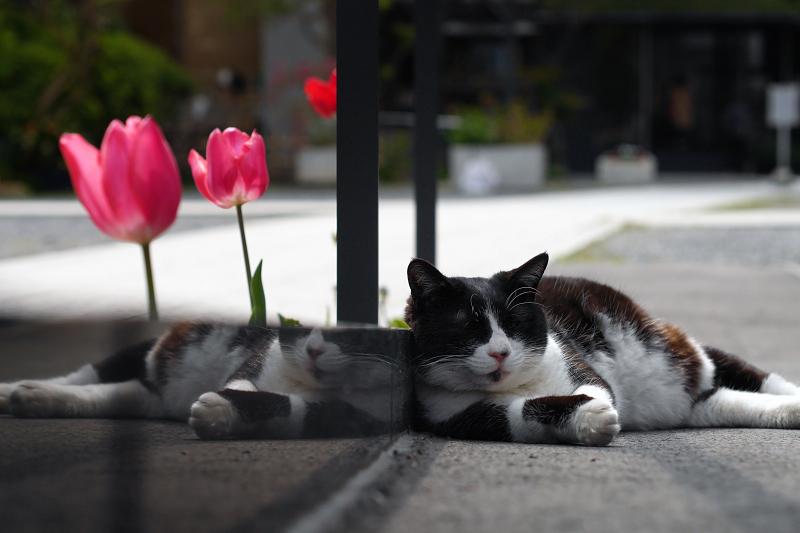 寺の境内のスロープで寝てた黒白猫3
