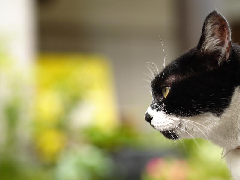 団子柄の白黒猫の表情3