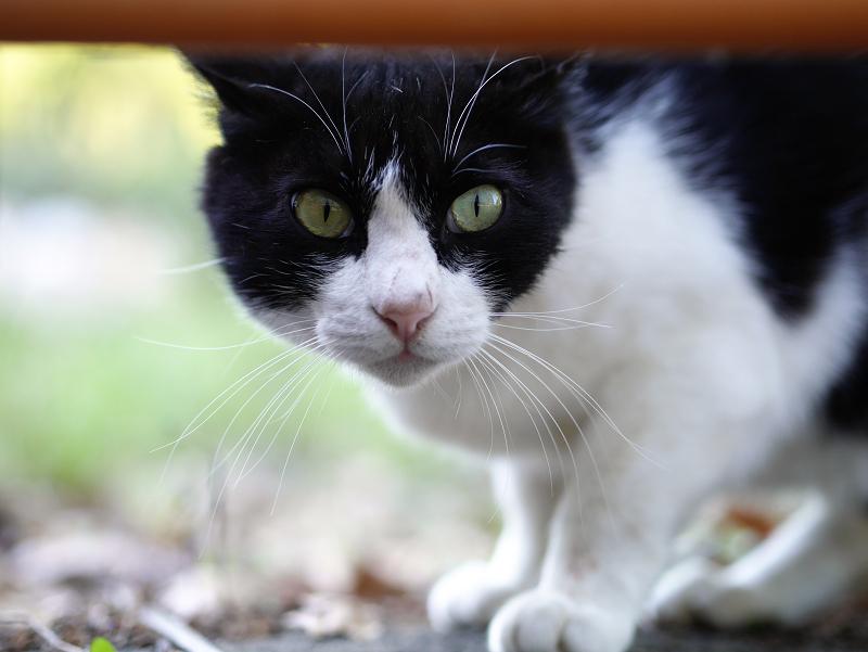 お城の遺跡発掘現場の黒白猫3