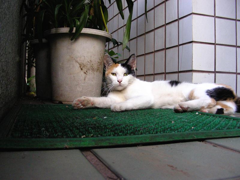 玄関マットと三毛猫01