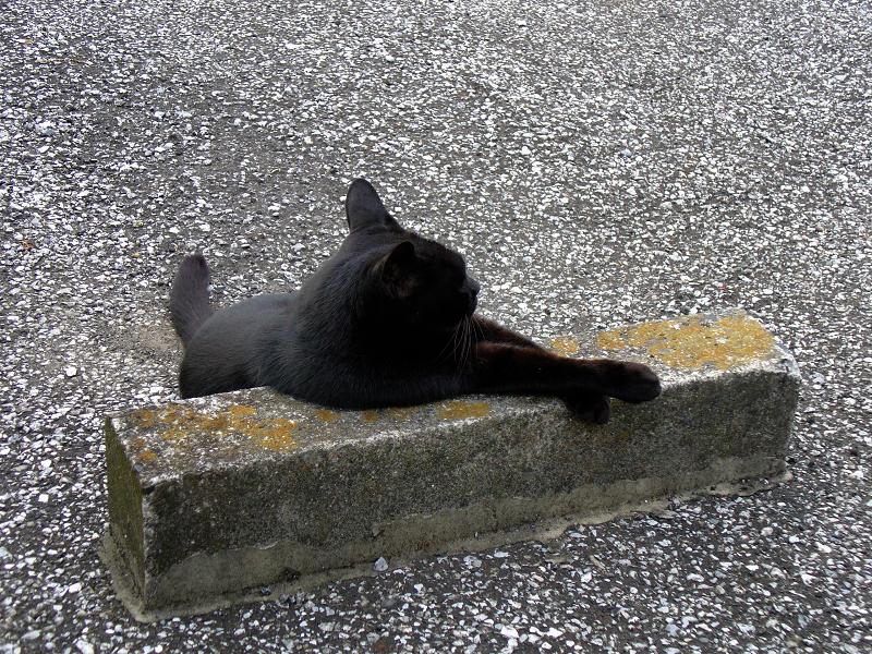 駐車場の車止めと黒猫