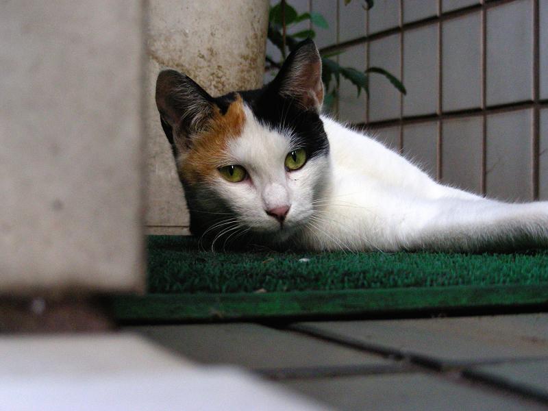 玄関マットと三毛猫2