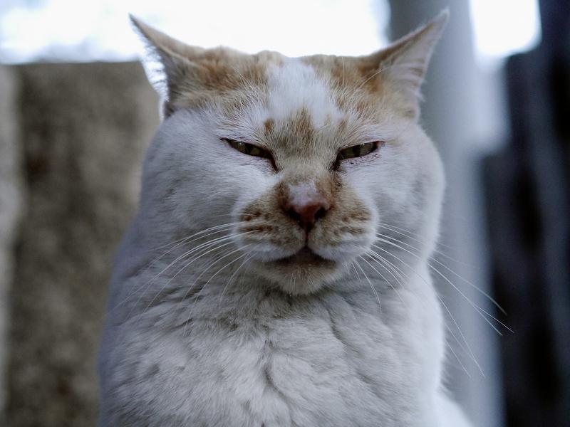 井戸の横の白茶猫03