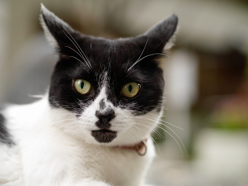 マンホールと白柄の猫のコロコロと変わる表情2