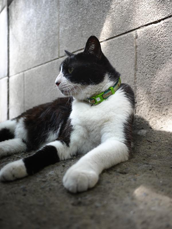 ブロック塀の横で寛ぐ黒白猫