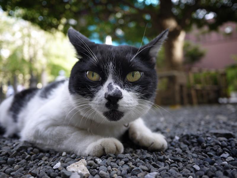 お団子柄友だち白黒猫の表情