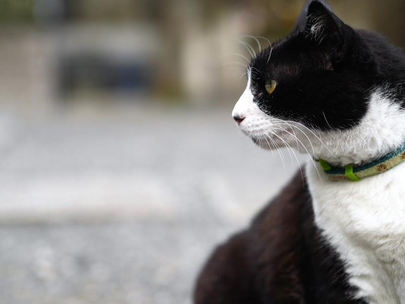 境内で真剣顔の黒白猫2