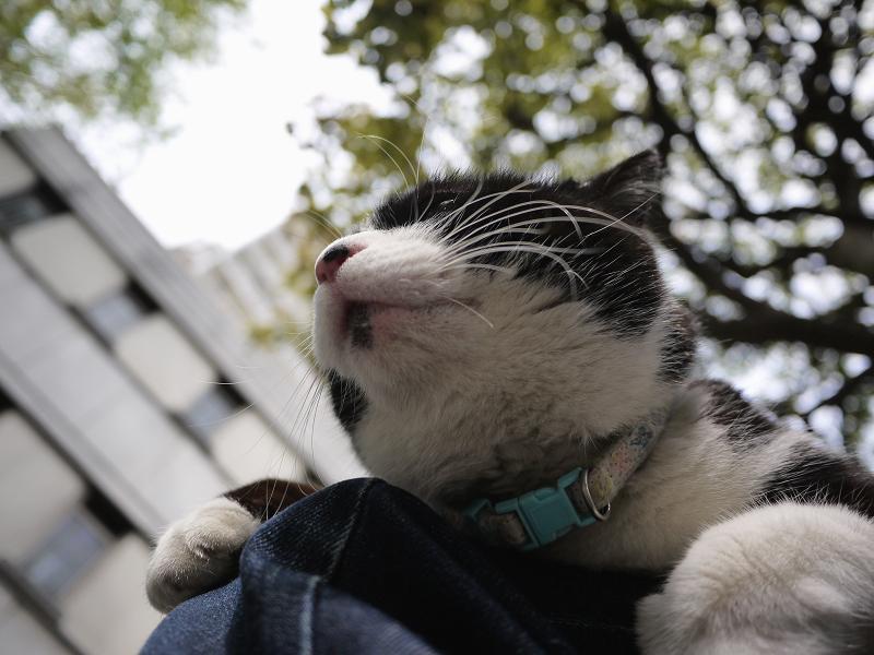 膝の上でまったり黒白猫2