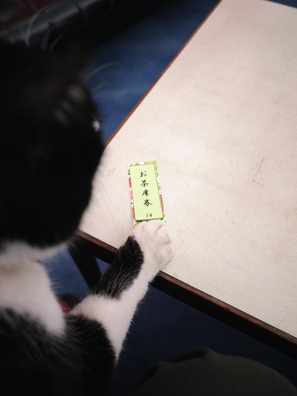 御茶会席の黒白猫02