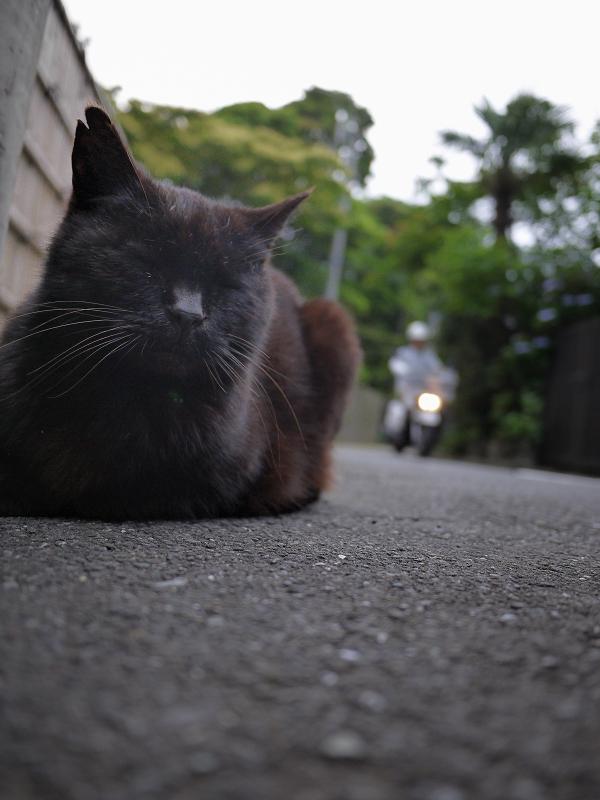裏路地の黒猫