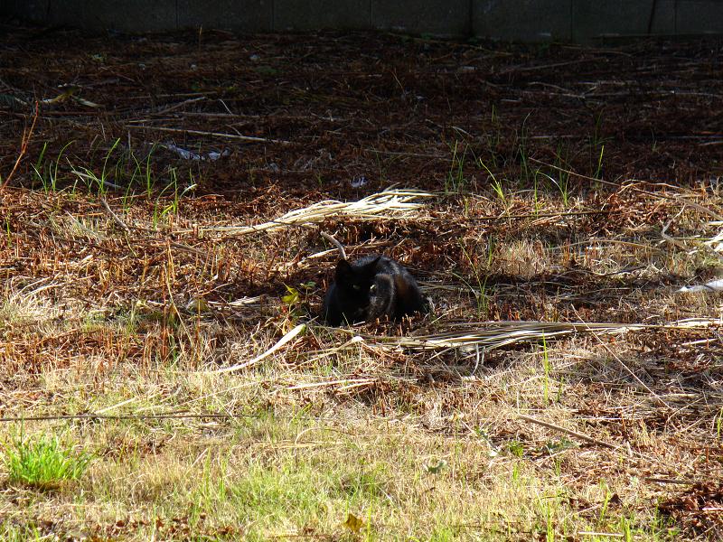 草原の黒猫3