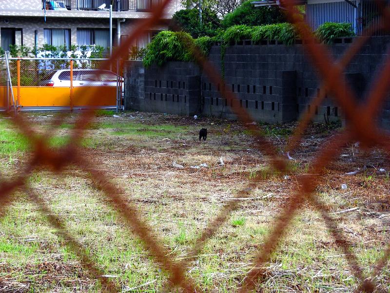 草原の黒猫4