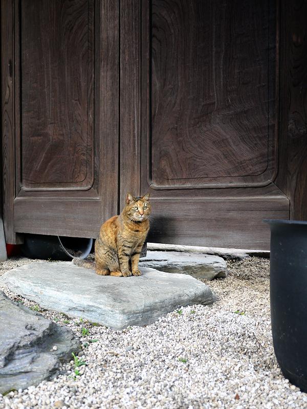 木の扉とサビ柄猫1