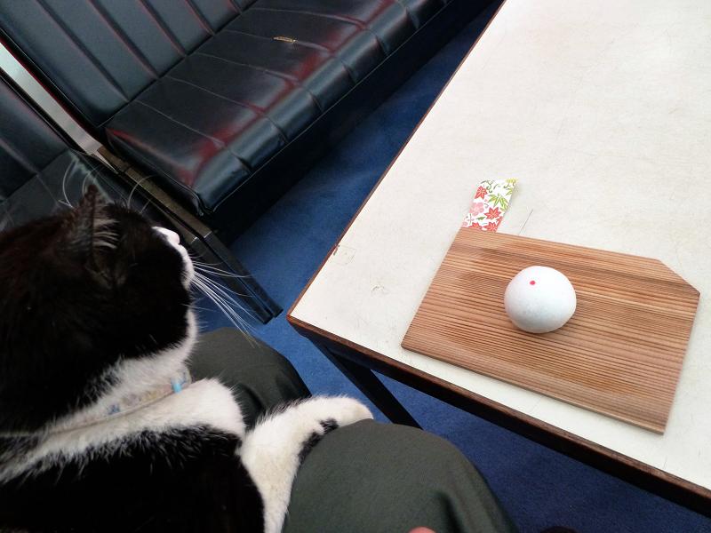 お茶会席の白黒猫01