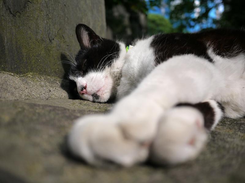 手を伸ばして熟睡してる黒白猫