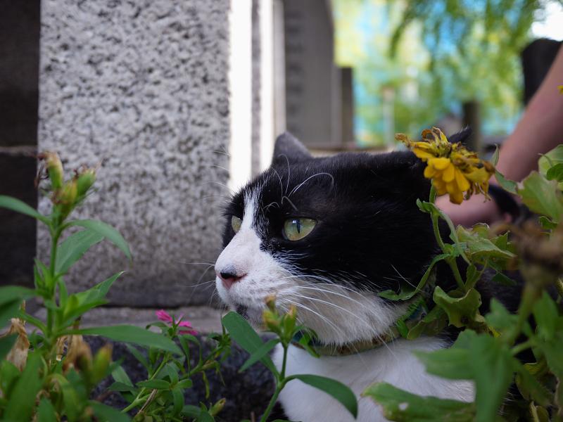 石柱と黒白猫