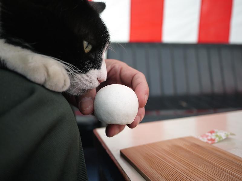 お茶会席の白黒猫02