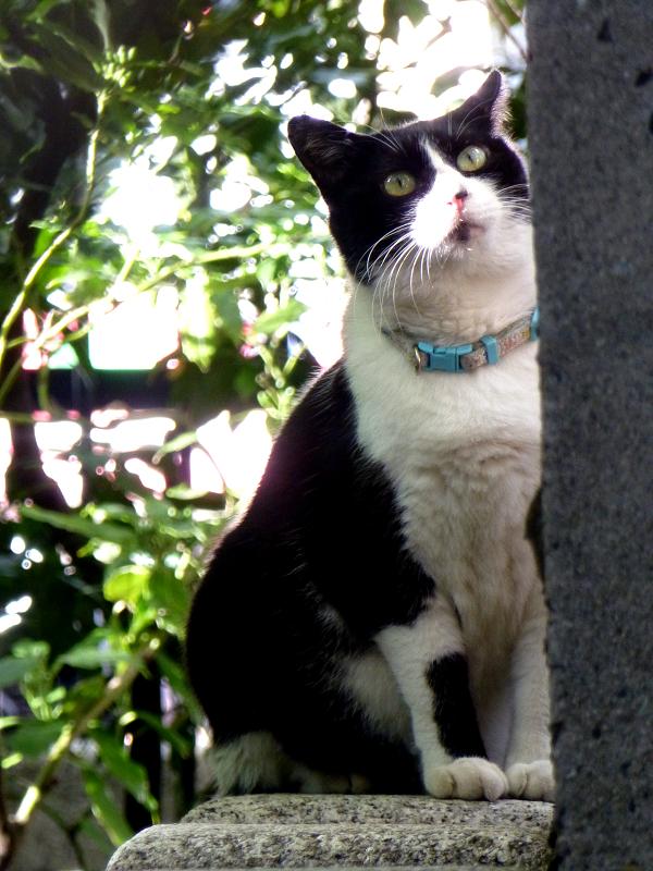 塀の下の黒白猫