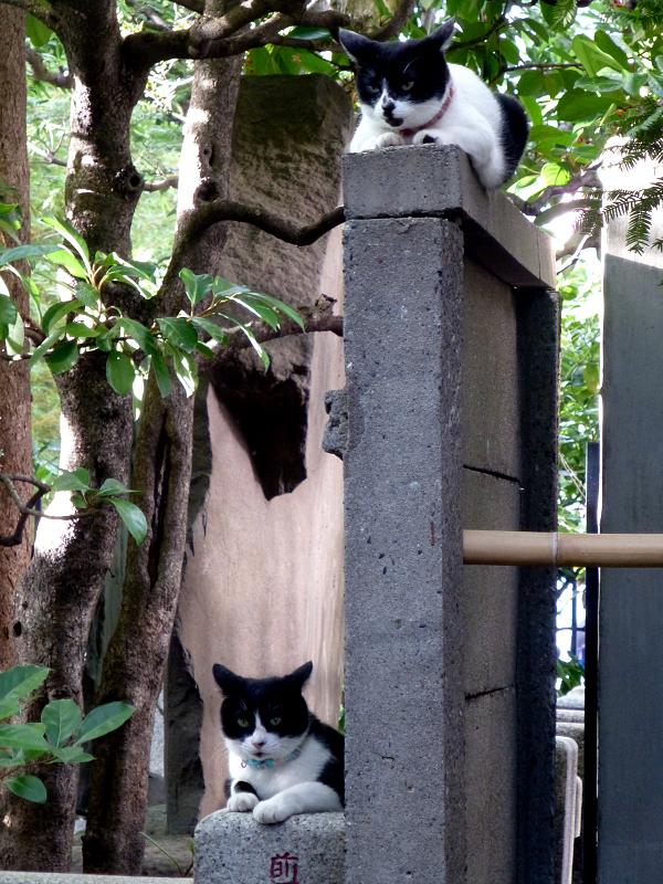 塀の上下の猫たち