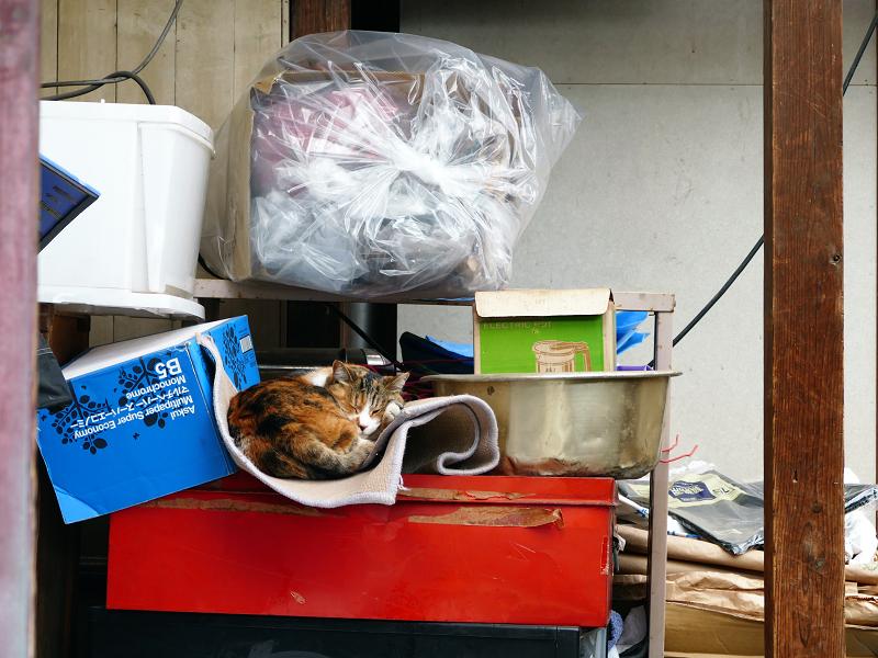 物置の三毛猫1
