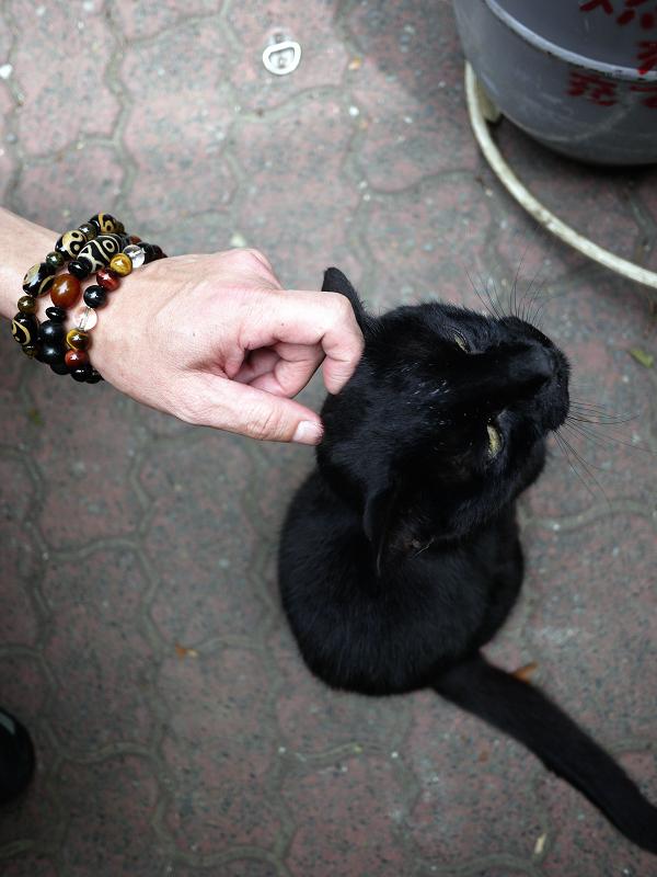 黒猫をハイアングルで1