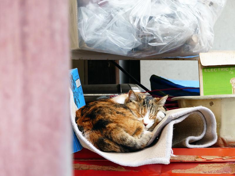 物置の三毛猫2