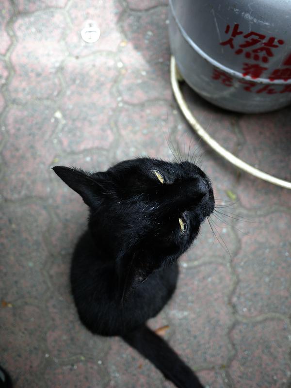 黒猫をハイアングルで2