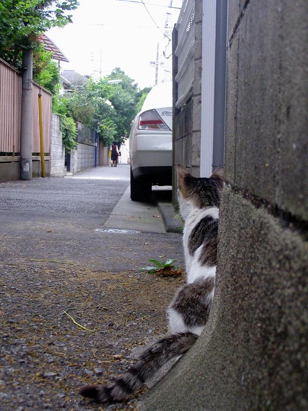 裏路地のキジ白猫たち3