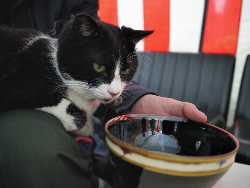 お抹茶と黒白猫02
