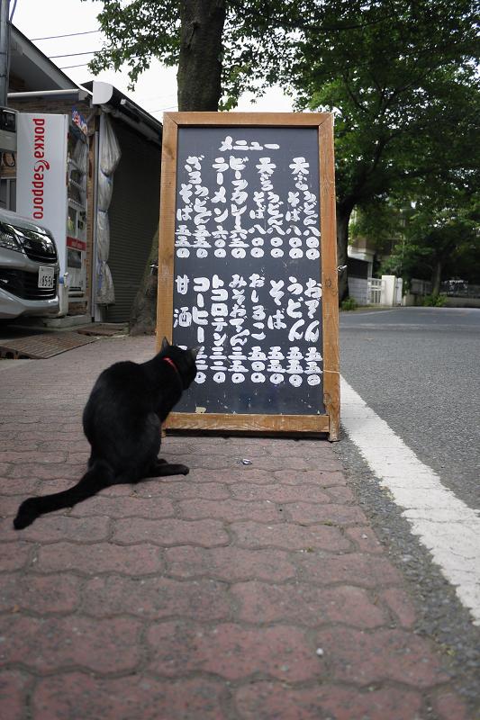 お土産屋さんの看板黒猫1