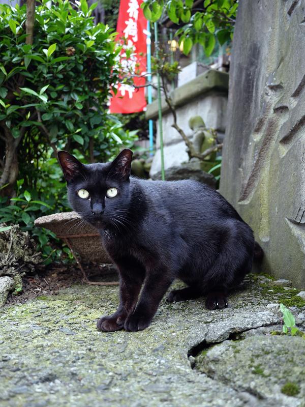 お社の黒猫1