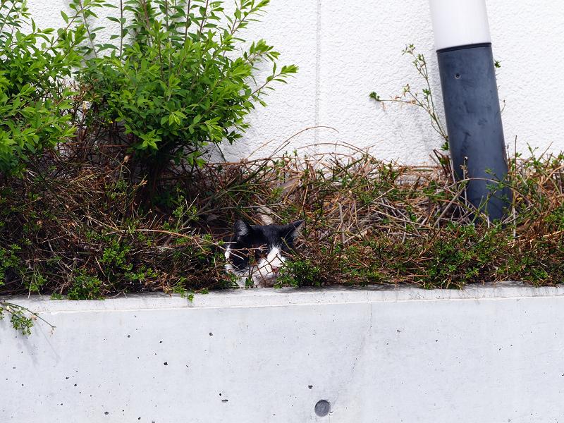 ビルの茂みの猫2