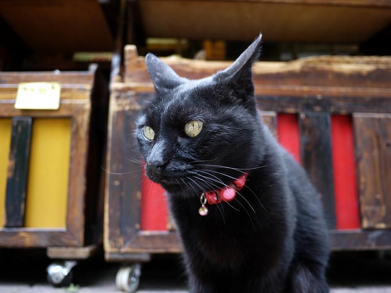お土産屋さんの看板黒猫2