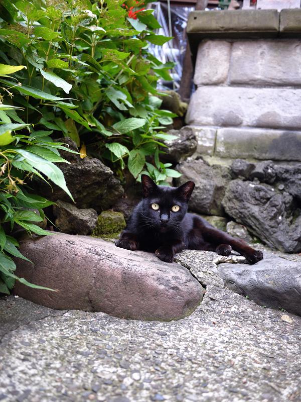 お社の黒猫2