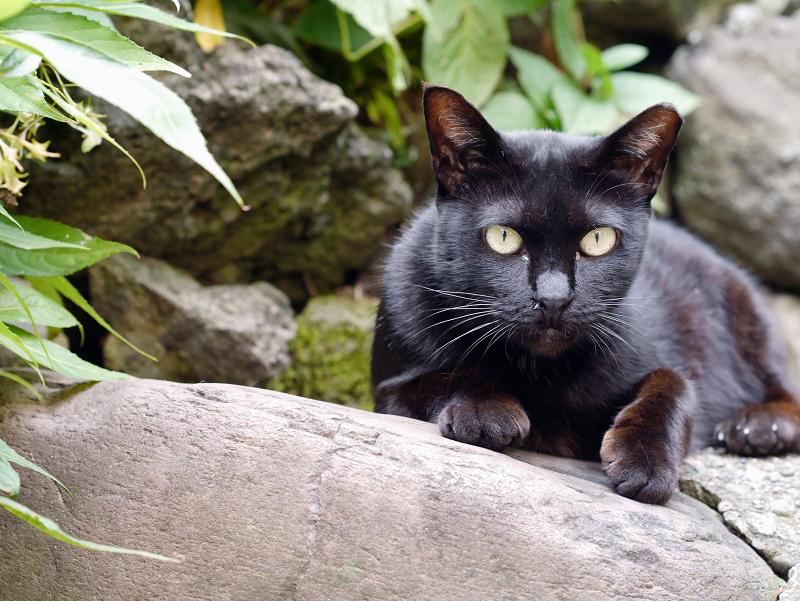 お社の黒猫3