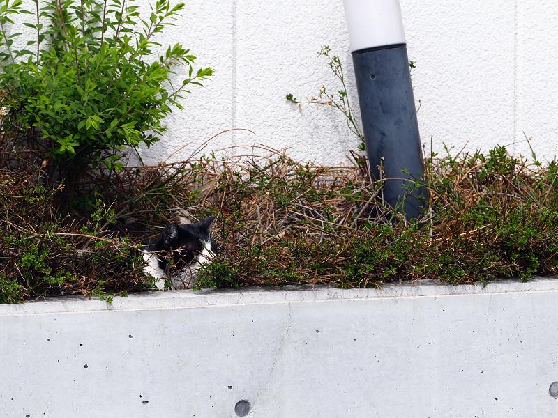 ビルの茂みの猫3