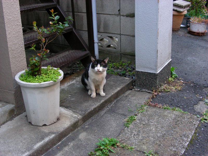 アパートの階段と白黒猫