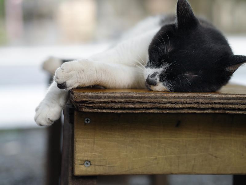 ベンチで涼んでいる白黒猫1