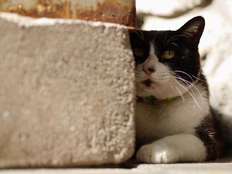 香炉台の横で佇む黒白猫1