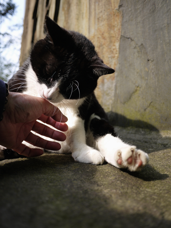 石碑の前の黒白猫01