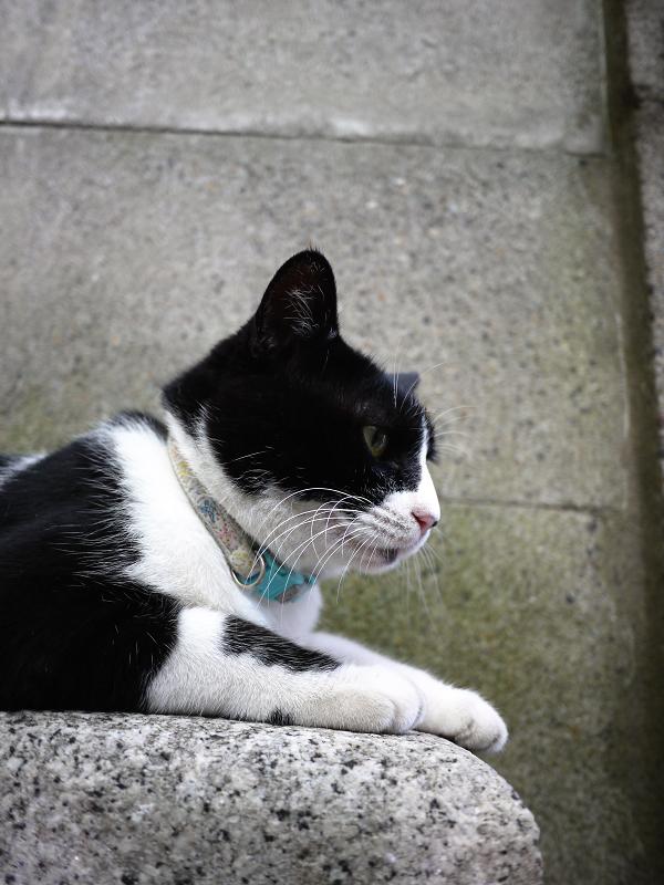塀の下で佇む黒白猫