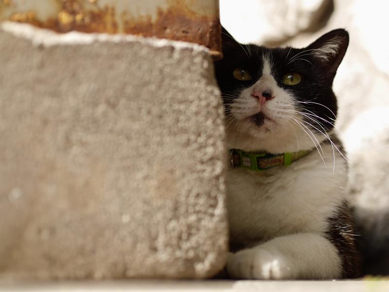 香炉台の横で佇む黒白猫2